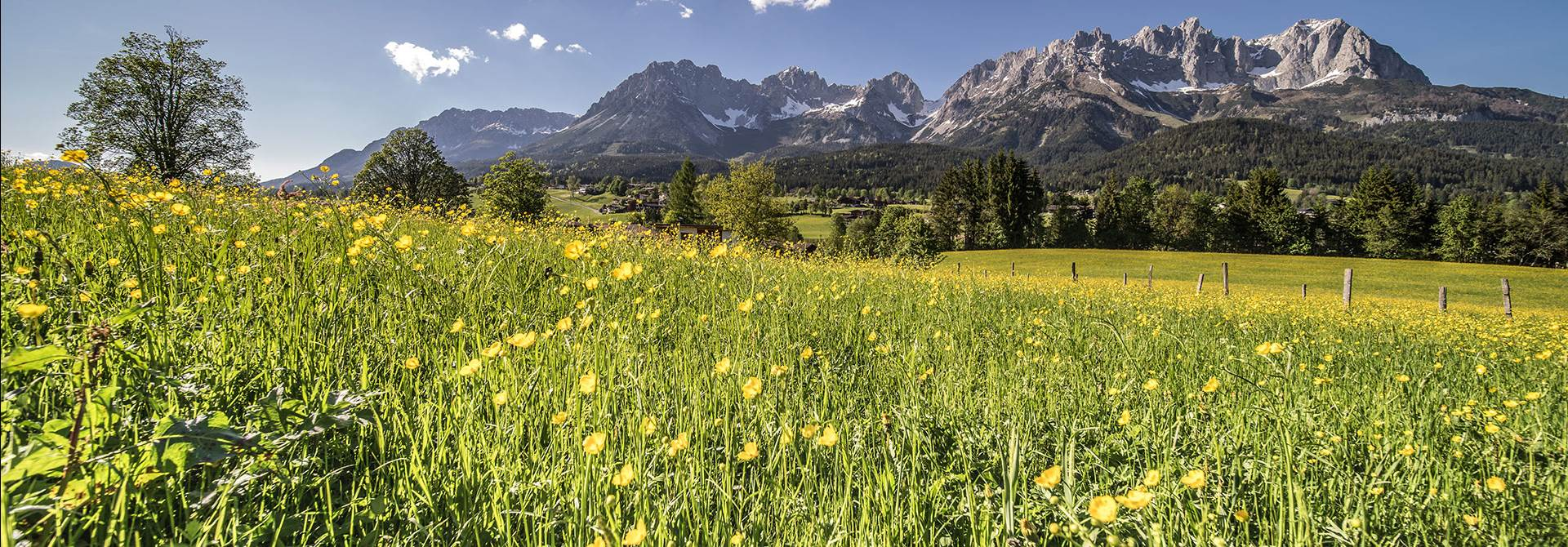 Flower meadow with a mountain panorama