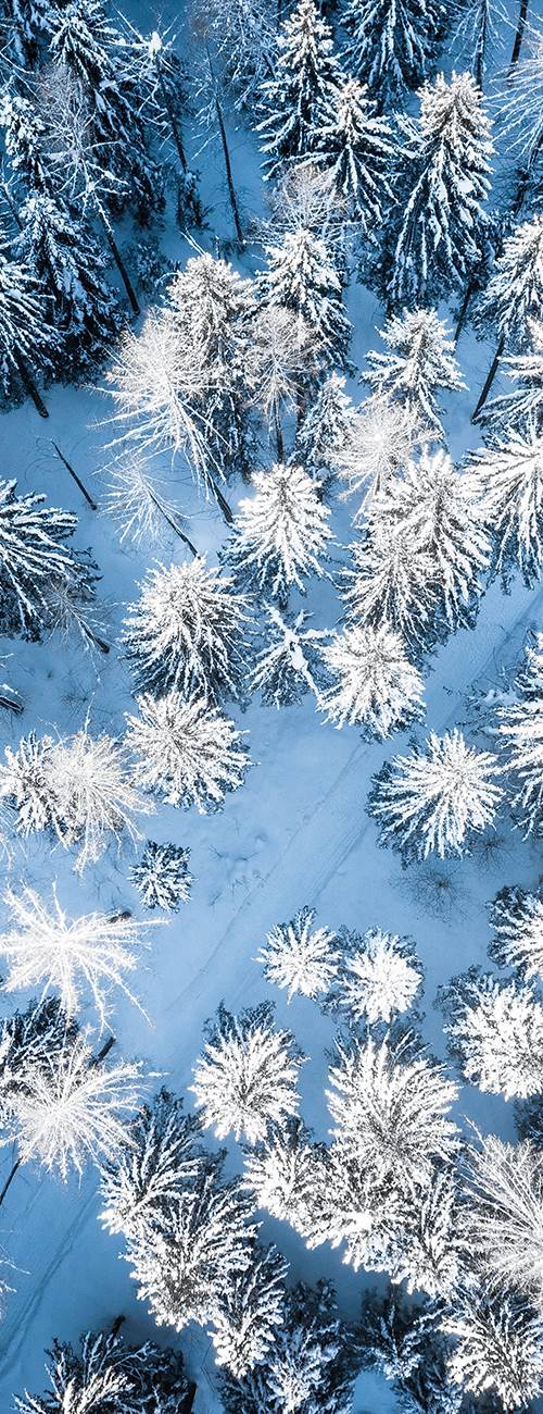 Snow-covered coniferous forest from above