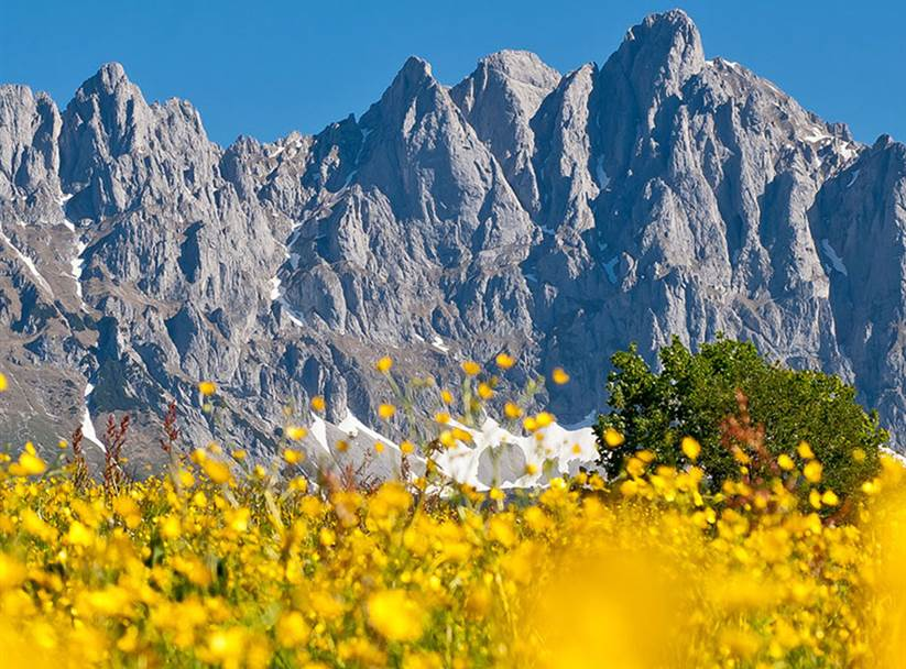 Yellow flowers with a mountain panorama